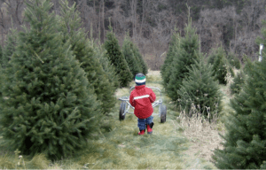 Kohls Christmas Trees.Events Archive Experience Columbia Montour Counties